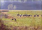 A gathering of Sandhill Cranes on the staging grounds in the morning sun.