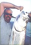 Tarpon caught March 2000 by Less during one of our Fishing expedition in Nicaragua around 150lb , Fish has been out of the water 20 second and release...To learn more on my fishing expedition and for