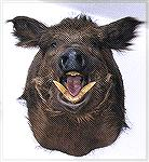 Head on view of Tony Mandile''s Russian boar. Russian Boar #2TM