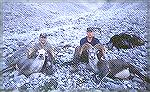 joebuck and Warren Chayer with two Stone rams from a hike in hunt off the Alaska Highway double header joebuck