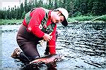 Angler with nice brook trout caught in the Little Minipi watershed area of Labrador.