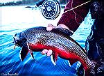 Typical brightly colored brook trout caught in the Parke Lake area of the Eagle River in Labrador.