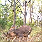 Hunters trail cam catches the shot from opposite angle